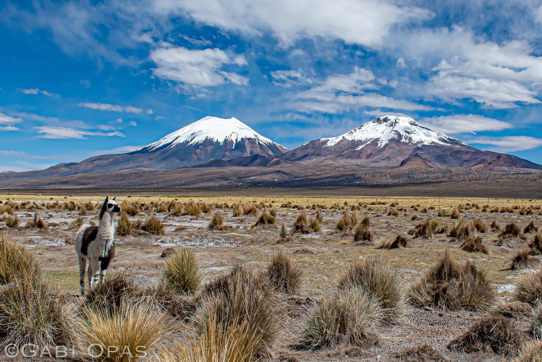 Volcanoes in Sajama Bolivia