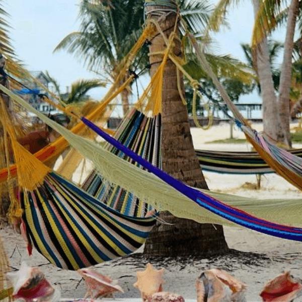 Colibri-Belize 2