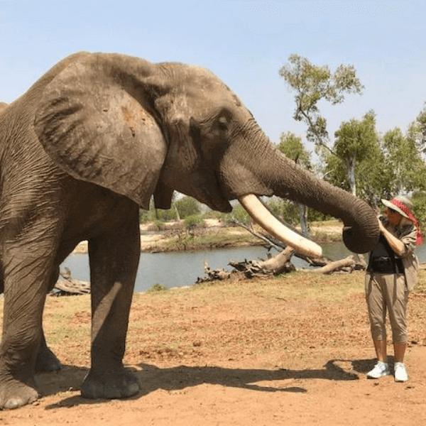Colibri-Elephant