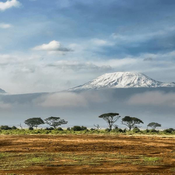 Colibri-Kilimanjaro