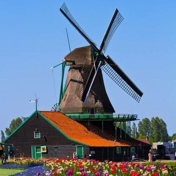 Colibri-Netherlands 6