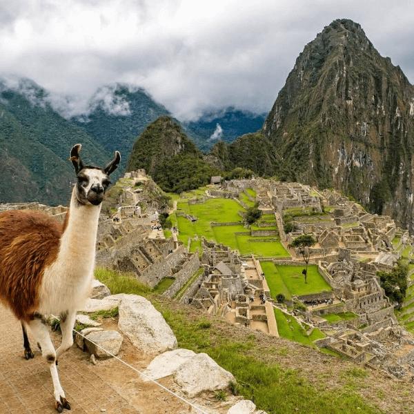 Colibri-Peru
